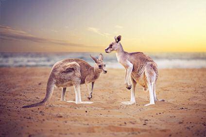 Stationfinder-australia/SixtAustralia.jpg